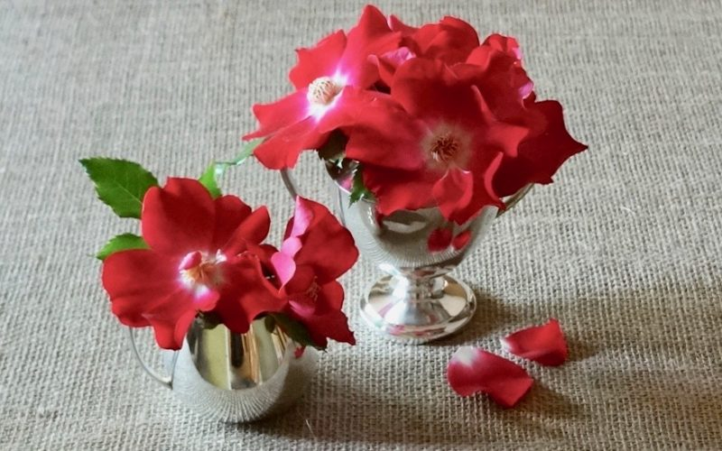 The Profile. Dortmund Climbing Rose. Antique Rose Varieties. Entertaining. Kentucky Derby Flower Arrangements Heirloom Sugar & Creamer Vases By Rebecca Gordon Editor-In-Chief Buttermilk Lipstick Culinary & entertaining Techniques For Everyday Cooks cooking & Baking Tutorials Tv Cooking Personality Pastry Chef Writer Food Stylist Photographer Digital Culinary Photo Journalist Game Day Tailgating Modern Southern Socials Southern Hostess