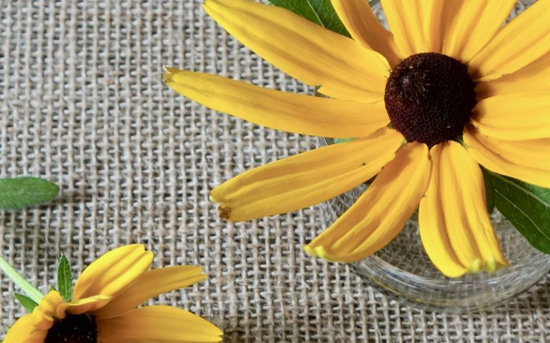 Indian Summer Black Eyed Susan By Rebecca Gordon Editor In Chief Buttermilk Lipstick. Southern Hostess Publisher Pastry Chef Modern Southern Socials Game Day Entertaining RebeccaGordon TV Cooking Personality How To Entertain With Seasonal Flowers Blooms Rudbeckia hirta Indian Summer