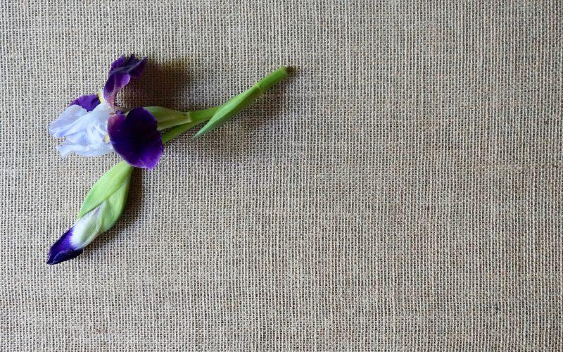 Alcazar-Iris-Tall-Bearded-Iris-Rebecca-Gordon-Garden-Tutorial-Buttermilk-Lipstick-Publisher-Southern-Entertaining-Spring-Flowers-RebeccaGordon-Chef-TV-Personality-Birmingham-Alabama
