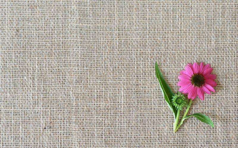 Echinacea-Purpurea-Purple-Coneflowers-Rebecca-Gordon-Garden-Essentials-Buttermilk-Lipstick-Culinary-Entertaining-Techniques-RebeccaGordon-Southern-Hostess-Pastry-Chef-Birmingham-Alabama