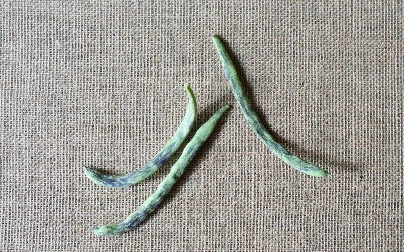 Heirloom-Pole-Beans-Rattlesnake-Beans-Rebecca-Gordon-Editor-In-Chief-Buttermilk-Lipstick-Culinary-Entertaining-Technique-Rebecca-Gordon-Garden-Recipes-Chef-Gardener-Southern-Hostess-Birmingham-Alabama
