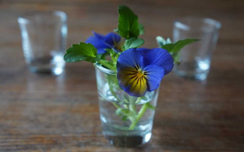 Shot Glass flowers spring entertaining rebecca gordon southern hostess recipes tailgating parties party wedding shower showers baby shower buttermilk lipstick
